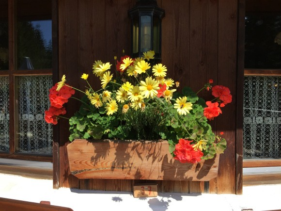 Windowbox at Nigerhutte