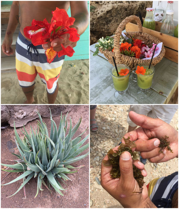 Foraging on Aruba Photo: Heatheronhertravels.com