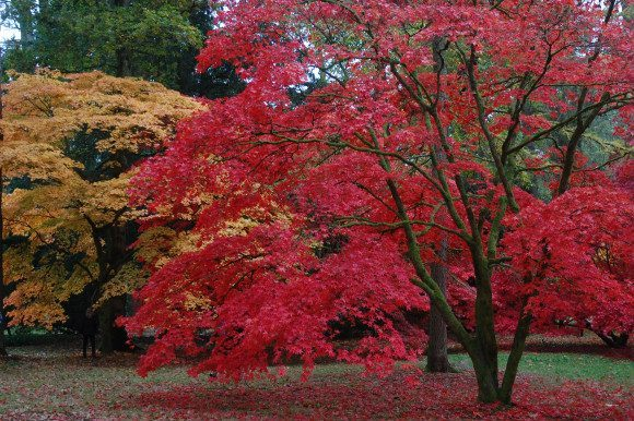 Westonbirt Arboretum Photo: Chris Callaghan