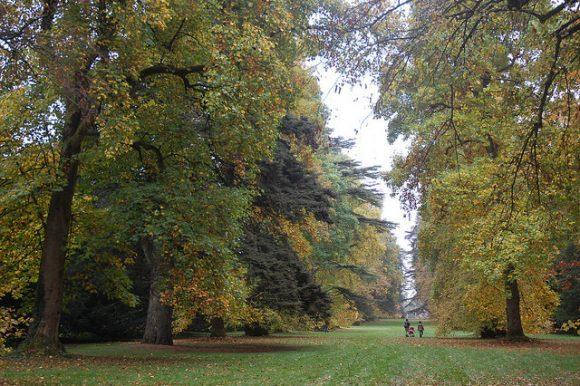 Autumn at Westonbirt Arboretum Photo: Chris Callaghan