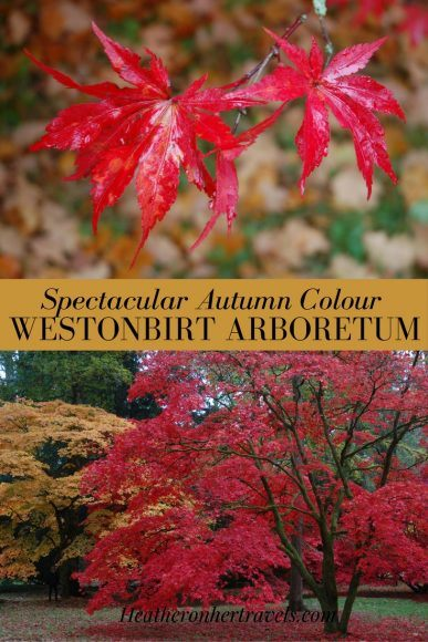 Read about Spectacular Autumn Colour at Westonbirt Arboretum