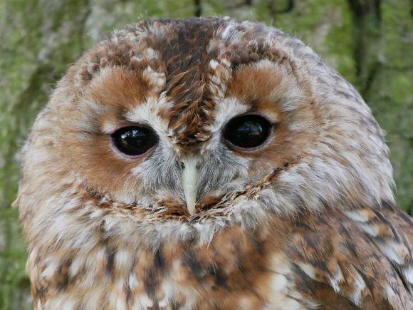 Owl at British Wildlife Centre Photo: Heatheronhertravels.com