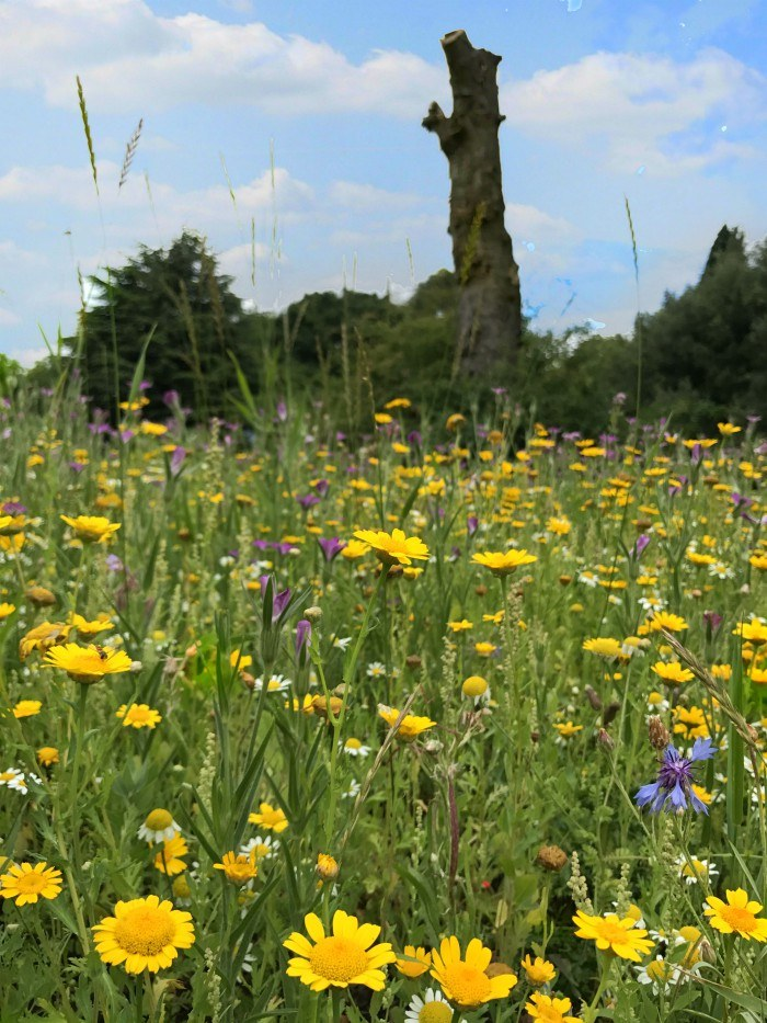 Wildflowers in Hyde Park Photo:Heatheronhertravels.com