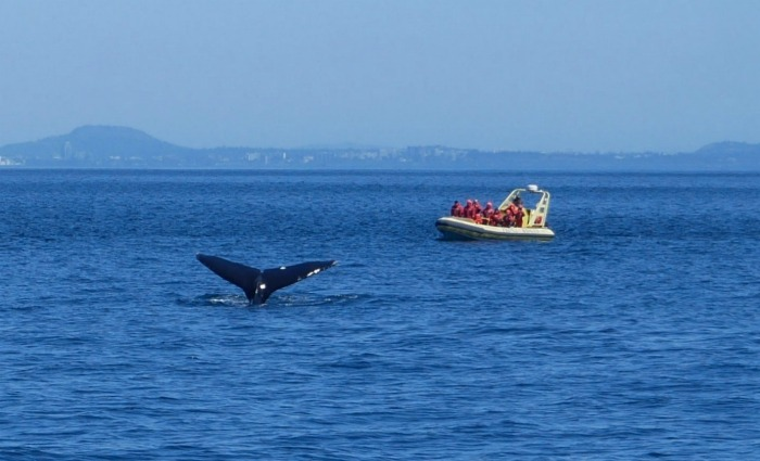 Whale watching in Victoria, Canada Photo: Heatheronhertravels.com