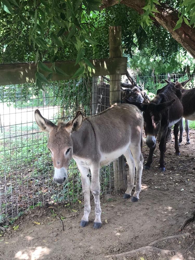 Donkey Sanctuary in Antigua Photo Heatheronhertravels.com