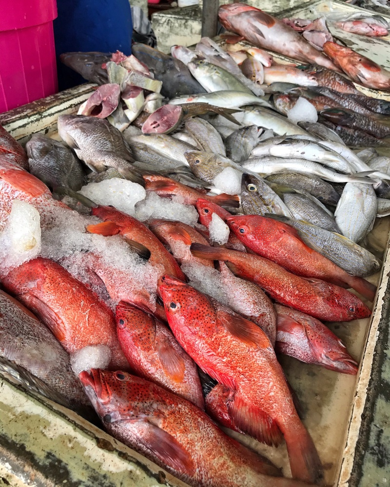 Fish Market St Johns Antigua Photo Heatheronhertravels.com