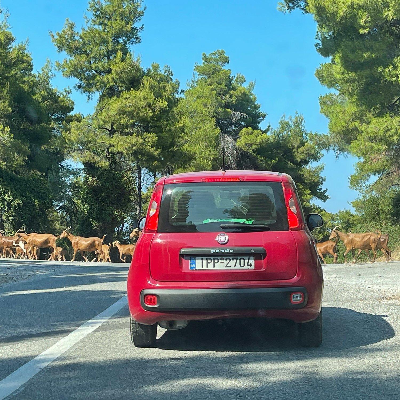 Goats on the road in Skopelos Photo Heatheronhertravels.com